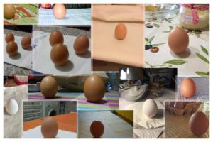 feng shui ovo 4 de fevereiro